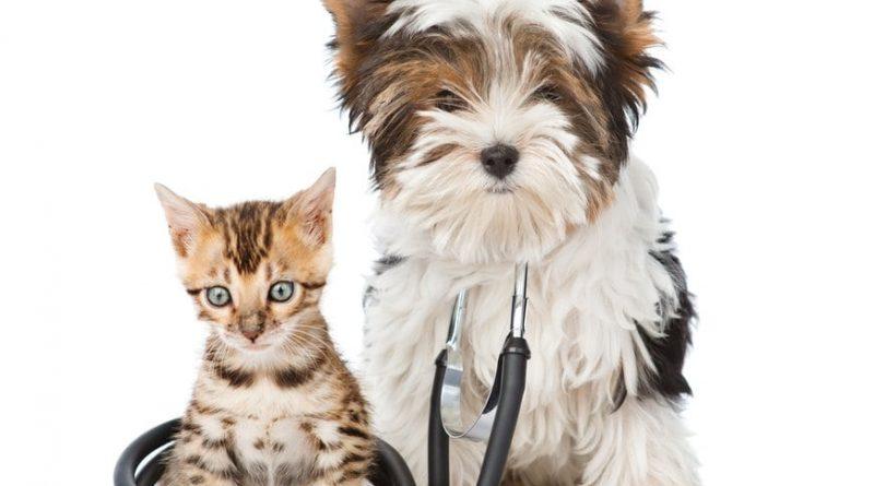 kæledyrsforsikring